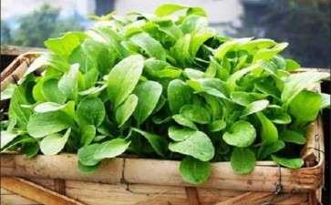 生产盆栽蔬菜要哪3个准备工作