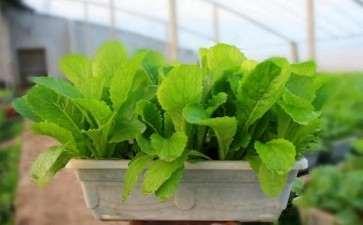 蔬菜盆栽材料怎么选择定植容器的方法