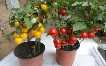 盆栽蔬菜怎么修剪整形的方法