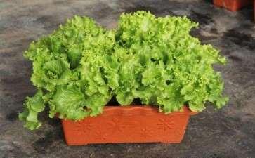 盆栽蔬菜怎么运输的方法