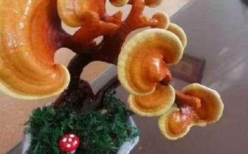 盆栽食用菌景观怎么室内设计的3个方法