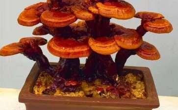盆栽食用菌园林景观怎么设计的5个内容
