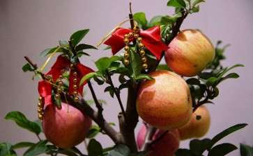 盆栽苹果休眠期怎么管理的方法