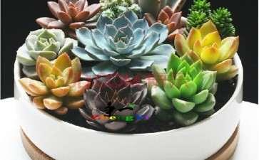 组合盆栽盆器装饰物怎么选择的方法