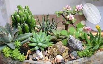 组合盆栽怎么日常养护的5个方法