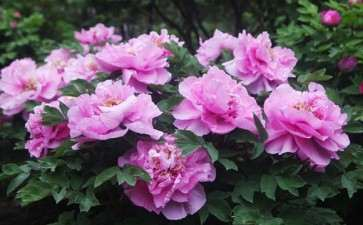 怎么促进盆栽花卉在园艺疗法中的应用