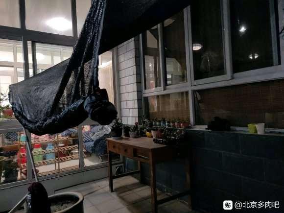 刚给多肉安上遮阳网 是不是太密了 图片