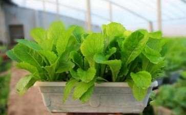 盆栽蔬菜病虫害怎么防治的2个方法