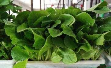 施用有机肥对小白菜盆栽土壤的9个影响
