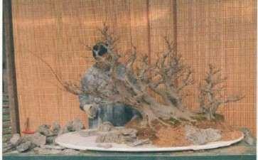 树石盆景《金戈铁马》怎么制作的详解