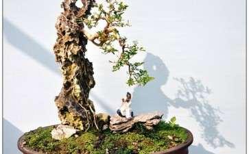 《中国盆景文化史》第二版三部曲