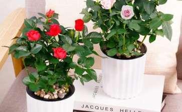 盆栽花卉由哪5个培养土组成