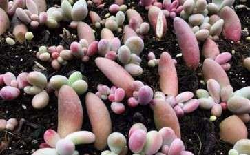 夏天多肉种子能发芽么 怎么办