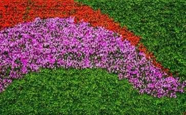 中国花卉协会零售业分会完成全年工作计划
