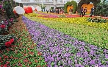中国花卉协会2019年工作总结