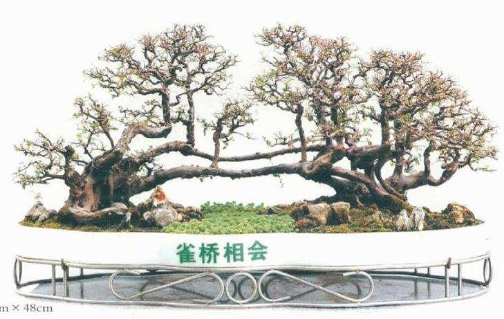 2020年广州迎春盆景展
