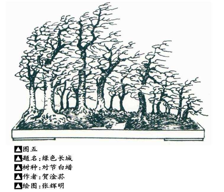 中国盆景造型的美学要素解析