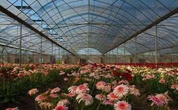 花卉流通市场的发展方向