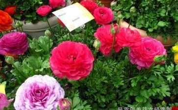 2020花卉市场销售情况可总结为以下4点