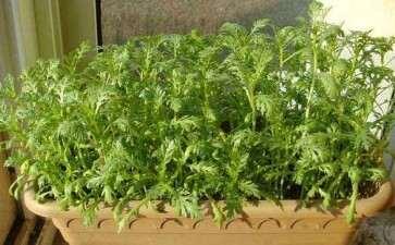 阳台盆栽蔬菜种植容器怎么准备的方法