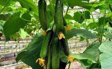 阳台盆栽蔬菜怎么播种的2个方法