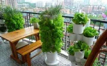 阳台盆栽蔬菜怎么植株调整的3个方法
