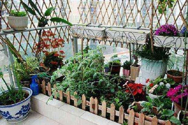 阳台盆栽蔬菜怎么收获的2个方法