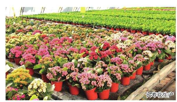 盆栽产品的市场有多大