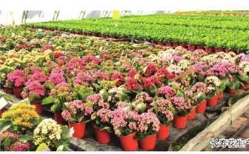 花卉盆栽产品的市场有多大