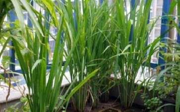 控制水稻盆栽土壤水分的新方法