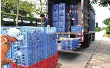 为什么云南成盆栽月季生产中心