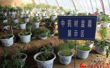 南宁市中草药盆栽产品消费市场调查与研究