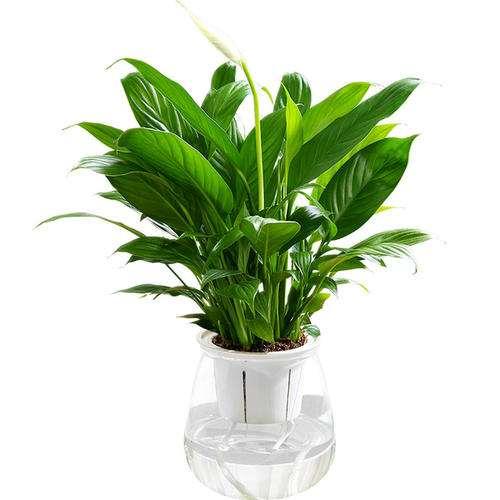 对乌兰察布居民室内盆栽花卉的研究