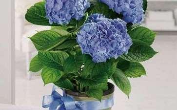 为什么国内对室内盆栽花卉的研究起步较晚