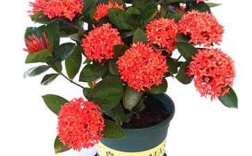 盆栽花卉的普及率与购买意愿