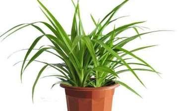 盆栽花卉的生长状况怎么样