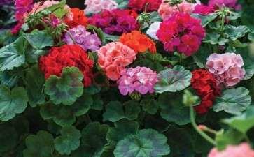 不同居住年限居民与盆栽花卉多样性的关系