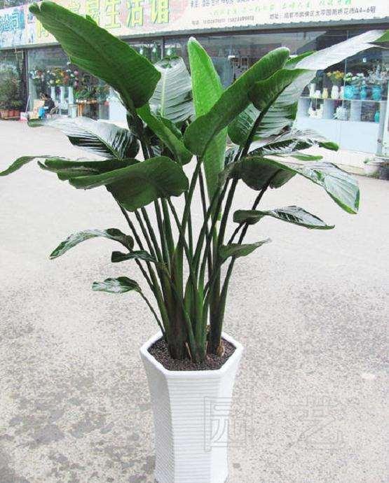 察哈尔盆栽花卉的种类和使用情况的调查