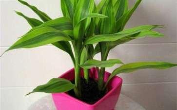 为什么察哈尔没有正规的盆栽花卉服务机构