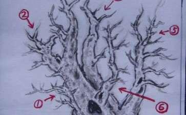 一本多杆三角枫盆景的设计图 图片