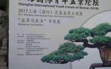 上海植物园展会上的大阪松盆景