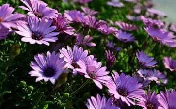 2020年 昆明一季度鲜花损失超过30亿元