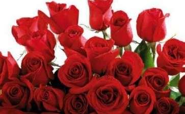 为什么俄罗斯玫瑰花生产的实践丰富