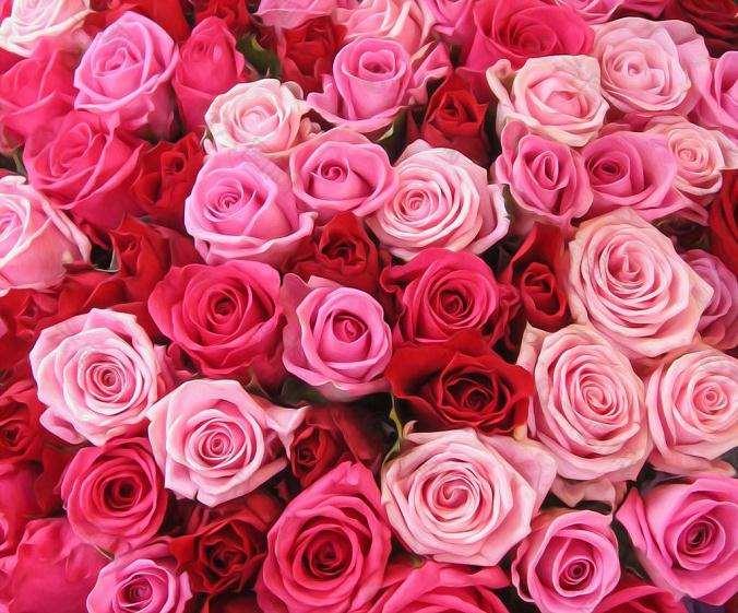 2020年1月玫瑰花的行情走势分析