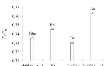 T2A处理对兰州百合叶片叶绿素荧光参数的影响