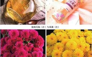 花仙子万花园罗勒供货量可达上百万盆
