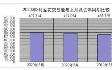 2020年3月台北花卉市场盆花行情