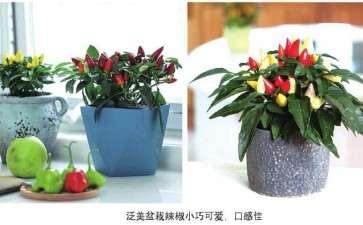 持续推出适合家庭种植的盆栽品种