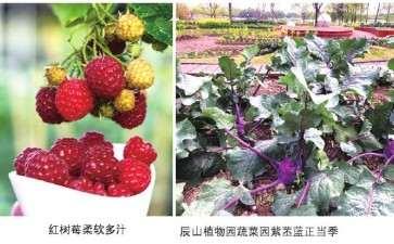 为什么盆栽蔬菜现在还属于小众产品