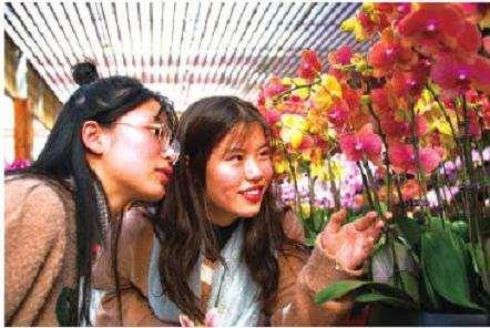 南京举办2019年大型兰花展